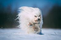 Kleiner weißer Hund hat Spaß im Schnee