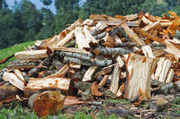 Firewood Pile For Winter
