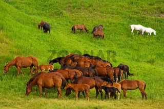 Horses on grass