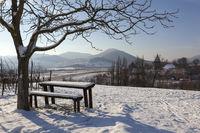 Winter in den Weinbergen bei Siebeldingen in der Südpfalz