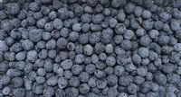 Mahonia berries texture