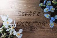 Sunny Crocus And Hyacinth, Schoene Ostertage Means Happy Easter