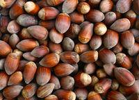 ripe hazelnuts texture