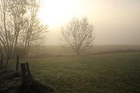 Nebelstimmung im Herbst