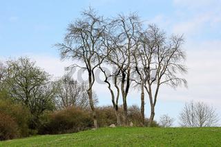 Bäume auf einem Hügel im Vorfrühling