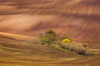 Famous moravian fields - Czech Republic