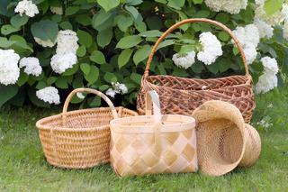 Wattled baskets and Hydrangea bush