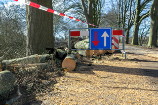 Traffic problems traffic sign storm damage fallen tree