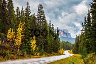 Highway among yellow grass