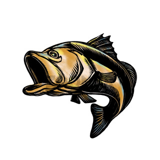 Largemouth Bass Scratchboard