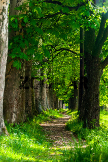 The trail to Vrelo Bosne