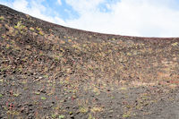 first plants on volcanic soil of Etna mount