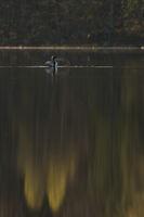 Stille am See... Prachttaucher *Gavia arctica*