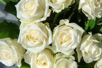 Weisse Rosen von oben gesehen