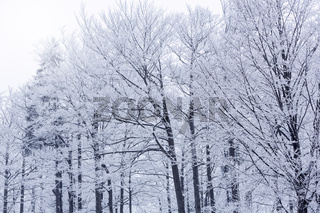 Kahle Äste mit Schnee bedeckt im Winter