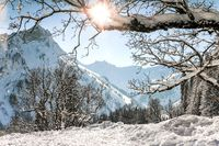Mountains winter landscape with tree branches and deep snow on clear sunny day. Allgau, Bavaria, Germany.