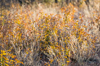 Close view of dry and yellow plants waving under the wind
