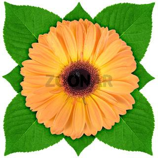 One orange flower with green leaf
