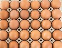 braune Eier aus biologischer Freilandhaltung
