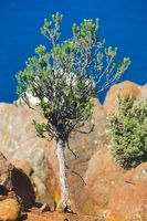 Tree on ocean cliff