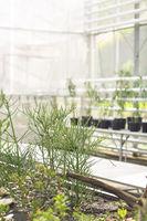 Beautiful exotic plants in botanical greenhouse