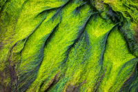 Texture of sea grass on a stone
