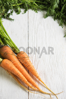 Freshly grown carrots