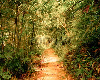Tunnel in fantasy tropical forest