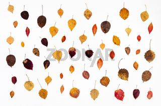 collage from various fallen autumn leaves on white