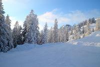 verschneite Winterbäume