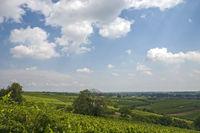 Blick über Weinberge im Sommer, Südpfalz