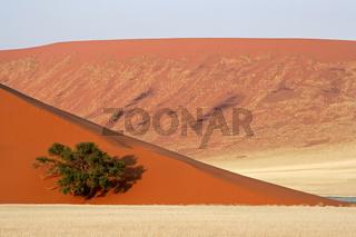 Dune, tree and grass