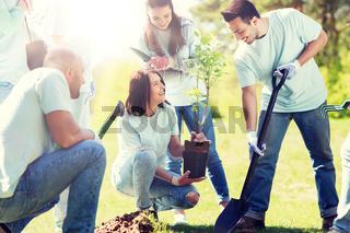 group of volunteers planting tree in park