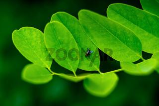 Fliege auf Blaetterzweig