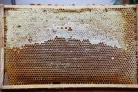 Honigwabe,teilweise gedeckelt