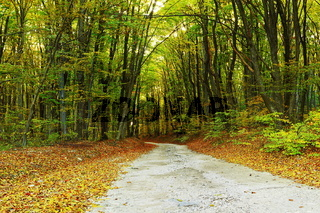 road in the woods in fall season