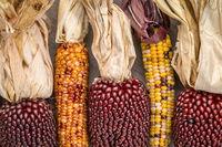 ears of decorative corn on wood