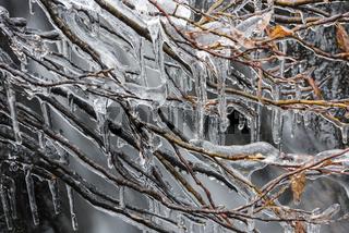 Eiszapfen in einem Bach, Dundret Naturreservat, Lappland