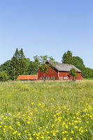 Barn with a flowering meadow in the summer