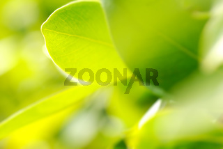 closeup picture of rich foliage