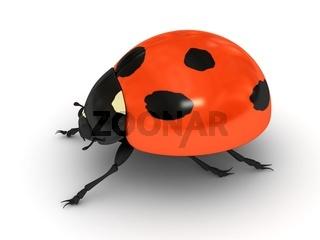 Ladybird over white background