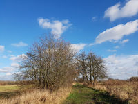 Landweg im Norden von Berlin an einem sonnigen Wintertag
