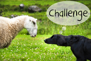 Dog Meets Sheep, Text Challenge