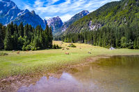 Horses graze on green field.Lake Lago di Fusine Superiore Italy Alps.