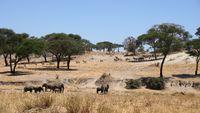 Tansania Tarangire Nationalpark