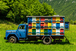 Colorfull and vibrant bee hives on old truck in Slovenia