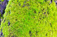 old timber with moss in the forest - closeup