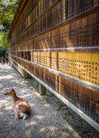 Deer in front of Wooden tablets, Nara, Japan