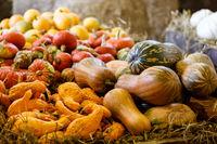 various types of ripe autumn pumpkins on the farm