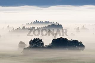 Nebellandschaft in den bayrische Voralpen, Oberbayern, Deutschland, foggy scenery, bavarian pre-alps, bavaria, germany